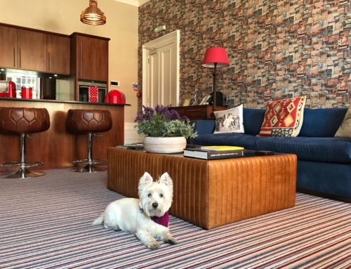 The wee white dug finds a 'posh pad' to rest his paws in Edinburgh